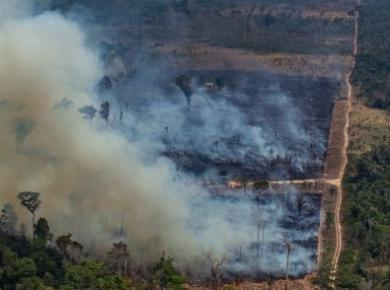 Amazon Forest is burning